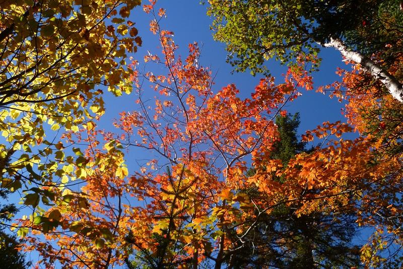 Les Provinces Maritimes en automne